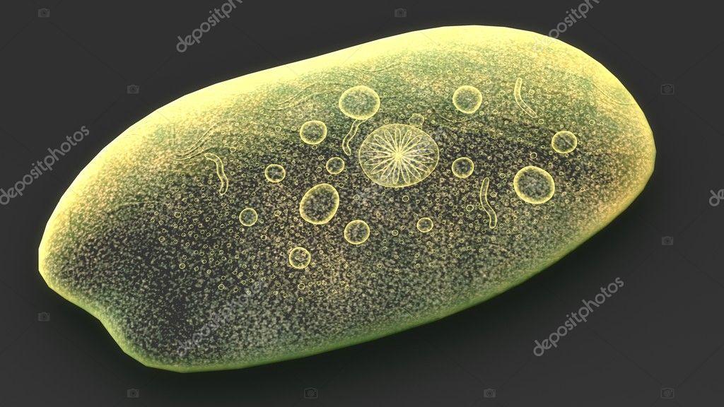 paraziták az amoebákat az emberekben