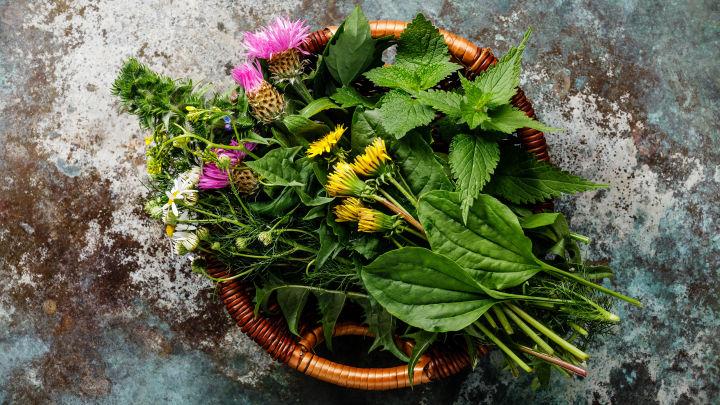 Méregtelenítés gyógynövényekkel: a bükki füvesember tanácsai