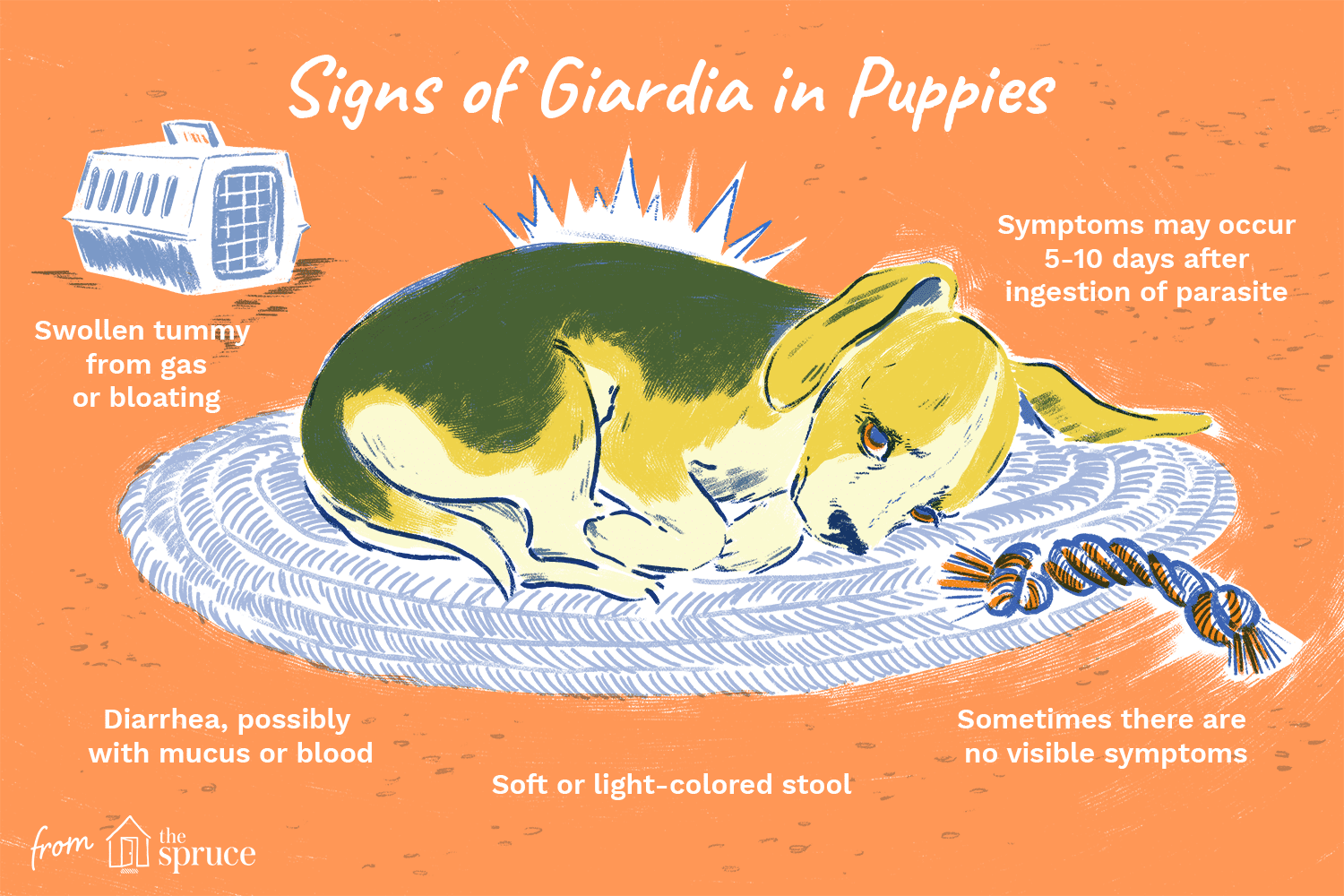 Pasozyt giardia u psa - Giardia in puppies