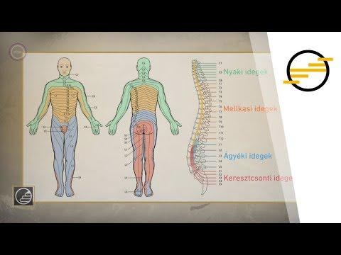 Gyógyszer az emberi test parazitáira, Természetes küzdelem a bélparaziták ellen | Gyógyszer Nélkül