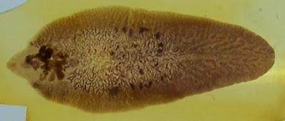 argo parazita orvosság parazitafertőzések gyógyítása