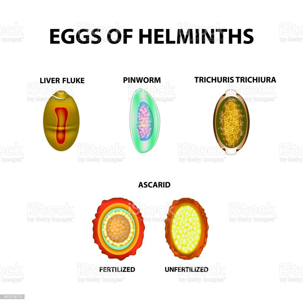 jó antihelmintikus tabletta paraziták példák