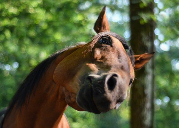 fereghajtas lovaknal