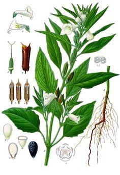 Pöltl Jánosné: Gyógynövények gyűjteménye | bookline