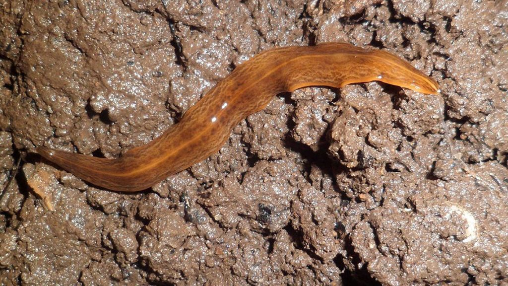 rossz lehelet nyalja a csuklóját az enterobiasis hélix jelei