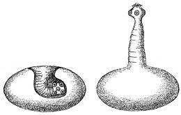 galandféreg marhahus szarvasmarha lánc antitestek