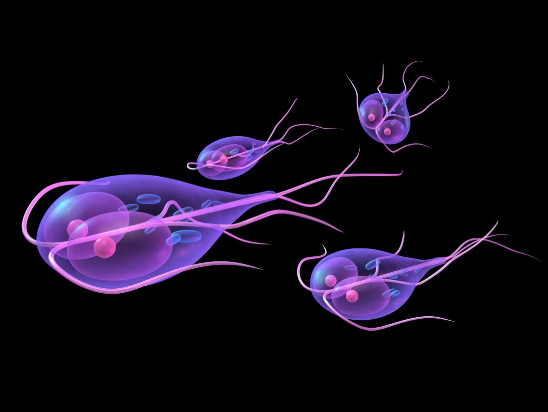 giardia infection contagious