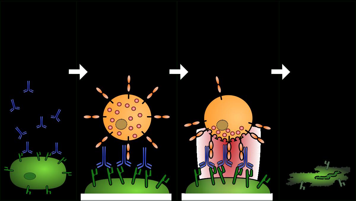 Tumorellenes immunválasz kiváltása kórokozókkal