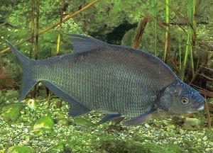 lehet e enni szárított halat féreggel húzza ki a parazitákat