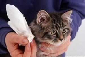 macska fülatka gyógyszer Meg lehet gyógyítani a férgeket drogok nélkül