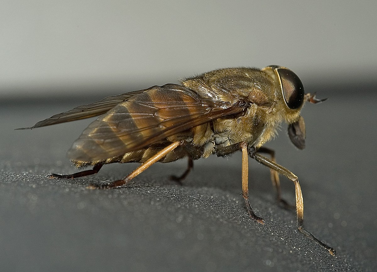a malária plazmodium morfológiája