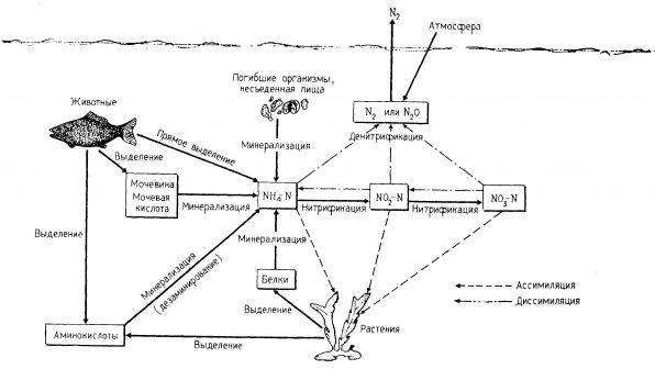 milyen mikroorganizmusok az intracelluláris paraziták