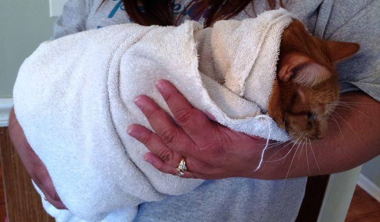 Bélférgek-kutya betegségek