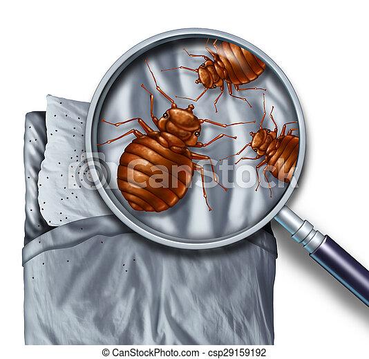 paraziták ágyneműben