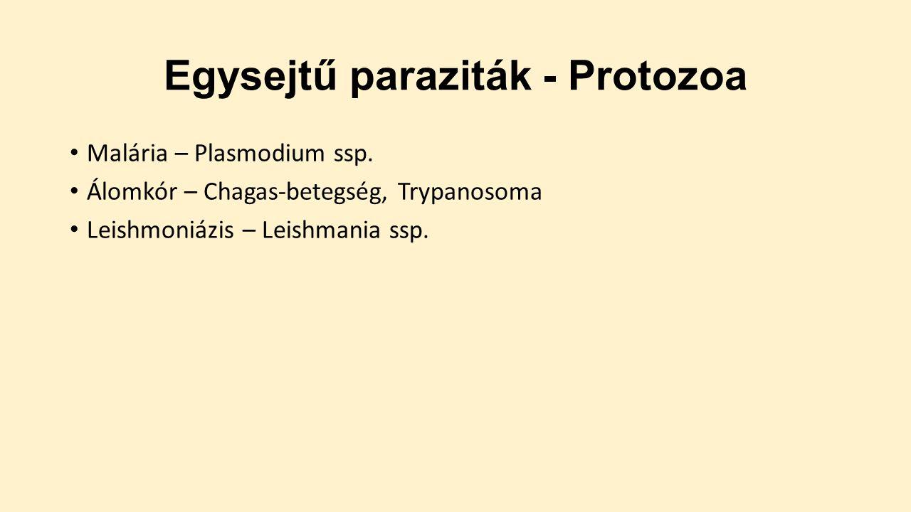 protozoai paraziták emberben milyen anyagot vizsgálnak enterobiasisra