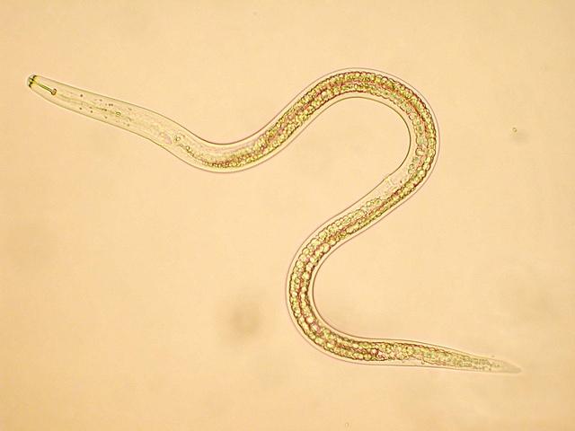 rák kezelés paraziták gombák és paraziták elleni védekezés