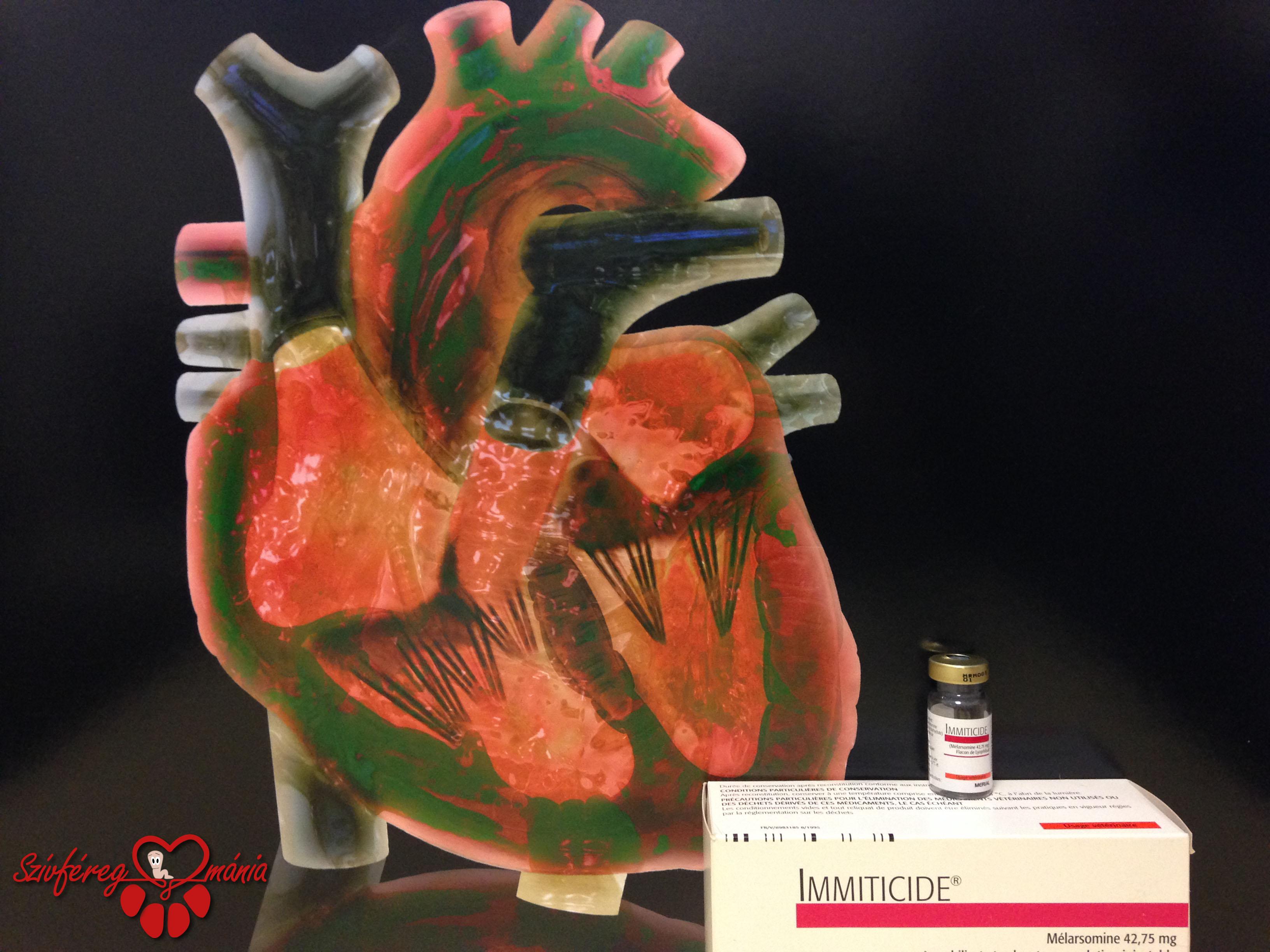 Mindent a szívférgességről