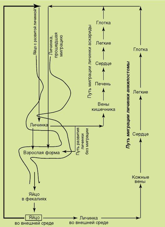 Sanpin giardiasis